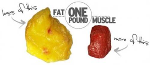 A Pound of Fat Vs. A Pound of Muscle